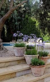 best 25 outdoor pots ideas on pinterest front yard decor lemon
