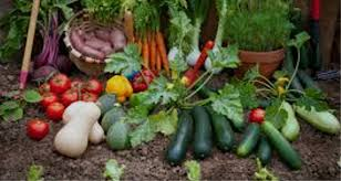these tips will help you grow the perfect vegetable garden