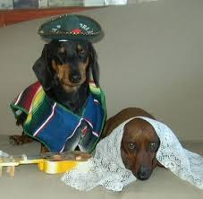 Halloween Costumes Miniature Dachshunds 753 Darling Dachshunds Images Animals Doggies