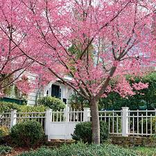 Best Trees For Backyard by 73 Best Best Trees For Alabama Images On Pinterest Alabama