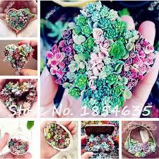 Cheap Flower Seeds - online get cheap flower seed echeveria aliexpress com alibaba group
