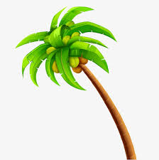 coconut tree design coconut tree green png and psd file
