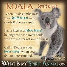 What Does The Tree Symbolize Koala Bear Symbolism U0026 Meaning Spirit Totem U0026 Power Animal