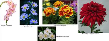 Birth Flowers By Month - yoworld forums u2022 view topic how about some birth flowers
