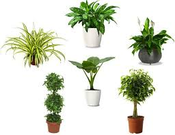Plants To Grow Indoors The 10 Best Plants To Grow Indoors For Our Health How You Living