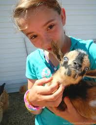 animal care chores for children hobby farms