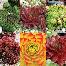 Heat Loving Plants by Heat Tolerent Plants Weather Plants