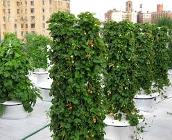 how vertical gardening could help save the world