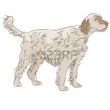 dogs with curly hair and floppy ears 54 dog with floppy ears cliparts stock vector and royalty free dog
