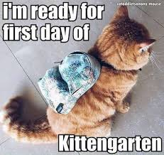 Cat Trap Meme - nice the cat trap is working cats pinterest testing testing
