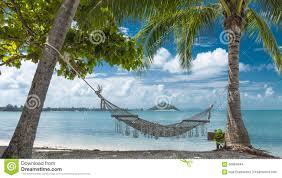 tropical beach with coconut palm trees and hammock stock