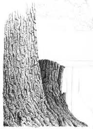 54 best how to draw realistic trees plants bushes and rocks