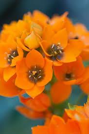 25 popular star flower ideas on pinterest hoya plants