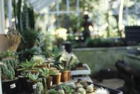 how to set up a terrarium for cactus plants home guides sf gate