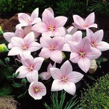 Flowering Patio Plants 77 Best Flowers I Grow Images On Pinterest Plants Garden Plants