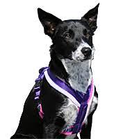 Comfort Flex Dog Harness Harnesses U0026 Halters