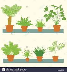 Home Plants by Home Plants Green Palms Bushes In Pots Set Vector Background