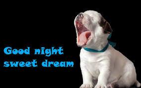 Goodnight Meme Cute - funny good night jpg