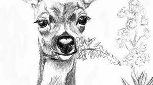 pencil drawings of deer 4 best images of deer sketches printable