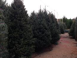 122175 max remarkable real trees prices
