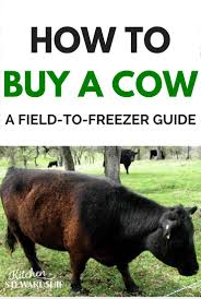 getting beef from field to freezer your guide to buying a cow