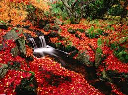 free fall desktop wallpaper downloads www fall colors