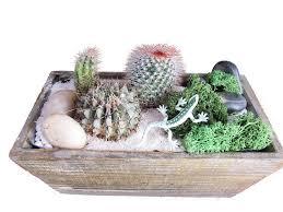 cacti terrarium in light wood rectangle planter peoria events