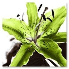 Lime Green Flowers - lime green flower clip art vector clip art online royalty free