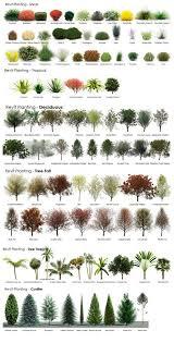 best 25 trees ideas on trees beautiful amazing real