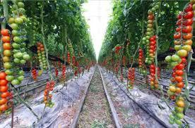 fall vegetables garden ideas home vegetable garden ideas