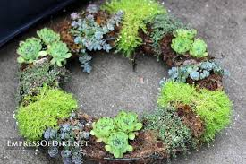 diy succulent garden art ideas empress of dirt