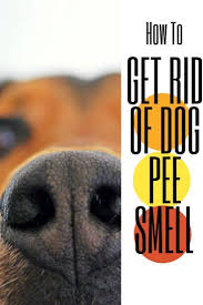 best 25 dog smell ideas on pinterest pet urine cleaner dog
