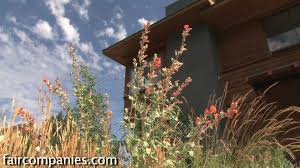 native plant solutions xeriscaping native plants and a drought tolerant yard leed