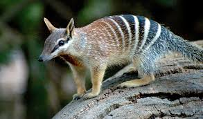 imagenes animales australia gallery australia s animal emblems australian geographic