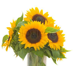 Vase Of Sunflowers Sunflowers Bouquet In Vase Stock Photo Colourbox