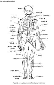 Anatomy And Physiology Tests With Answers 1 Human Anatomy And Physiology Course Learn About The Human Body