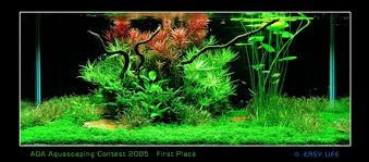 Aquascaping Competition Easy Life Aga Aquascaping Easy Life