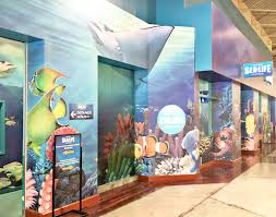 sea life arizona young environmentalists science program brie