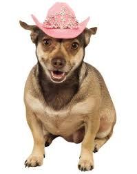 menorah hat menorah pet hanukkah hat costume zoo