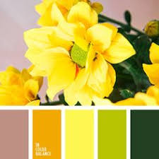 color palettes tulips pink coral green i love color