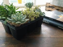 diy west elm inspired succulent planters u2022 your biggest fan grace