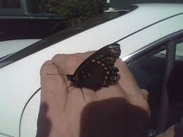 butterfly landings what they to you