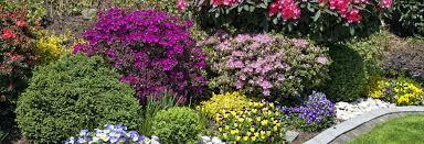 Garden Shrubs Ideas Pin By Flowerpots And Whatnots On Shrub Tapestry Pinterest