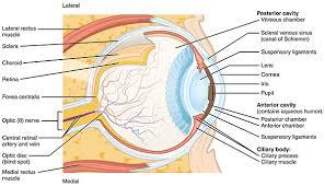 Picture Of Eye Anatomy Common Eye Disorders Arleo Eye Associates Arleo Eye Associates