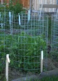 make your own tomato support cage antireliant com