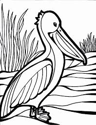 baby peacock coloring pages virtren com