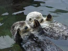 Sea Otter Meme - otters holding hands know your meme