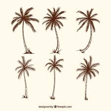 sketches of palm trees vector free