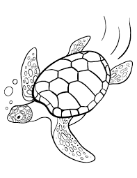 printable turtle coloring free pdf download http