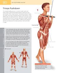 anatomy of exercise choice image learn human anatomy image